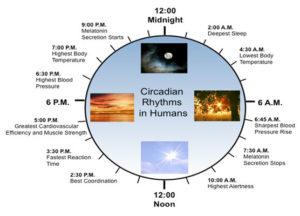 circadian system