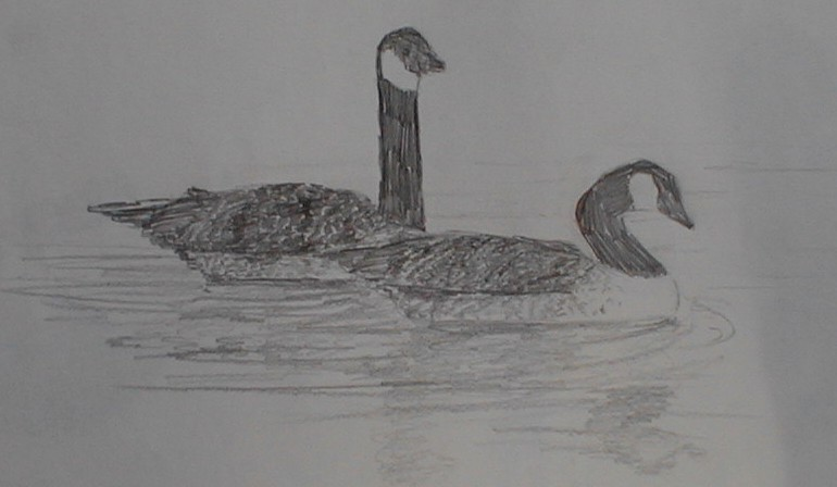Pencil sketch of two Canadian geese