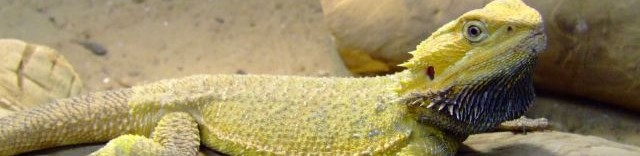 cropped-bearded_dragon_header1