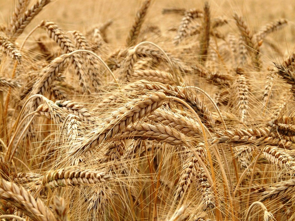 Hydrolyzed wheat protien01