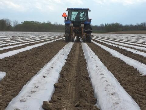 Planting Through 'Plastic'