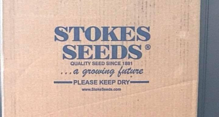 Seed Arrives