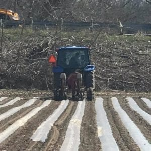 Planting Into Plastic