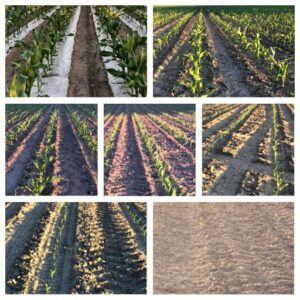 Corn Stages