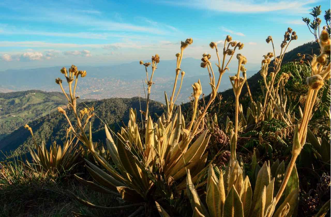 Esfera Viva, agua, agua potable, Baldías, Bello, biodiversidad, Colombia, Conservación, flora, frailejon, Medellín, páramo, paramos, Valle de Aburrá
