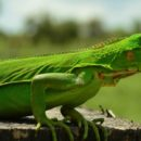 Esfera viva, fauna silvestre, fauna, conservación, proteción, valle de aburrá, medio ambiente, Medellín, Antioquia, Corantioquia