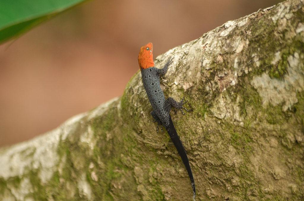 Biodiversidad, noticias ambientales antioquia, colombia, fauna silvestre, urabá, bananeras