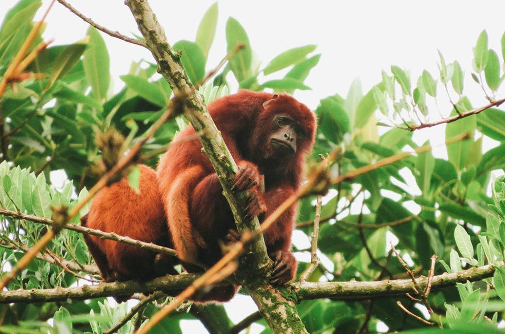 Magia salvaje, mono, monos de colombia, fauna, biodiversidad, primate, mamíferos, medio ambiente, antioquia