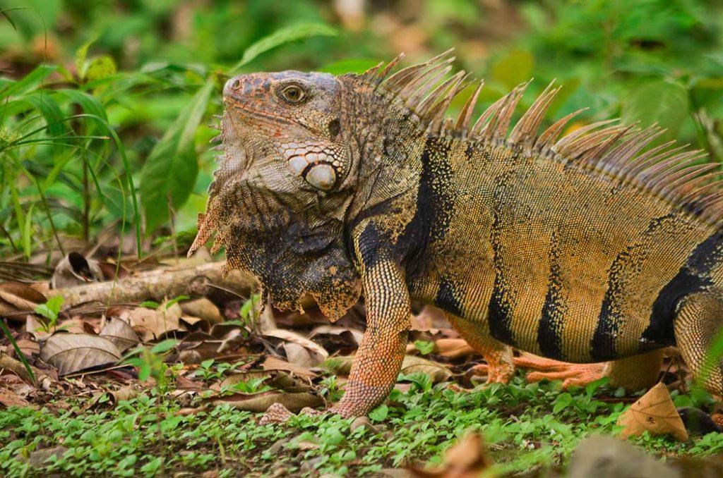 Biodiversidad, noticias ambientales antioquia, colombia, fauna silvestre, urabá, bananeras, medio ambiente, Esfera viva