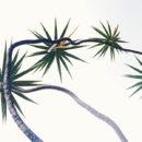 Dracena marginata, dracena, planta, flora, especie flora, plana Universidad Eafit, hojas, tallo, naturaleza, dracenea