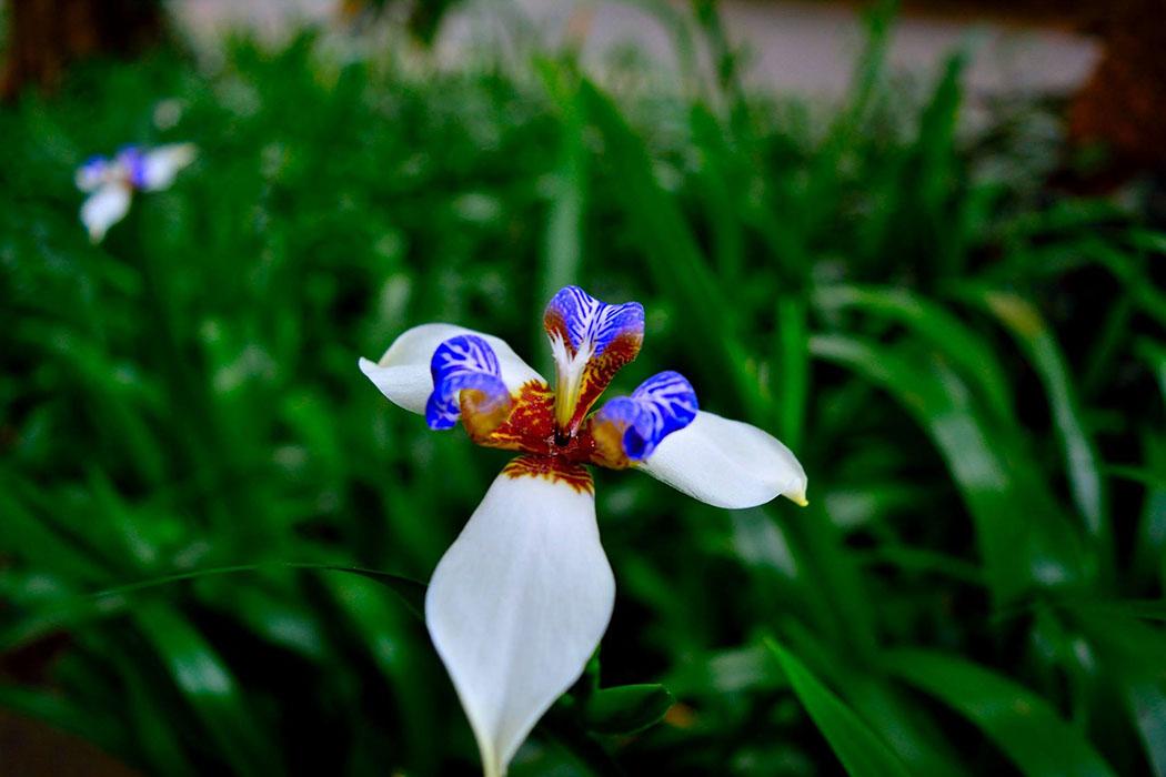 Diversidad, flor, flores, orquidea, colombia, plantas, flores colombianas, diversidad viva, esfera viva