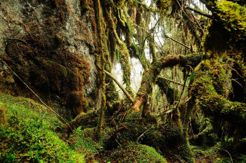 Páramo del sol, Antioquia, Urrao, Páramo de frontino, senderismo, Colombia, páramo, laguna, bosque, Esfera Viva, destinos ecoturísticos, ecoturismo colombia, camping, aventura, bosque de musgo