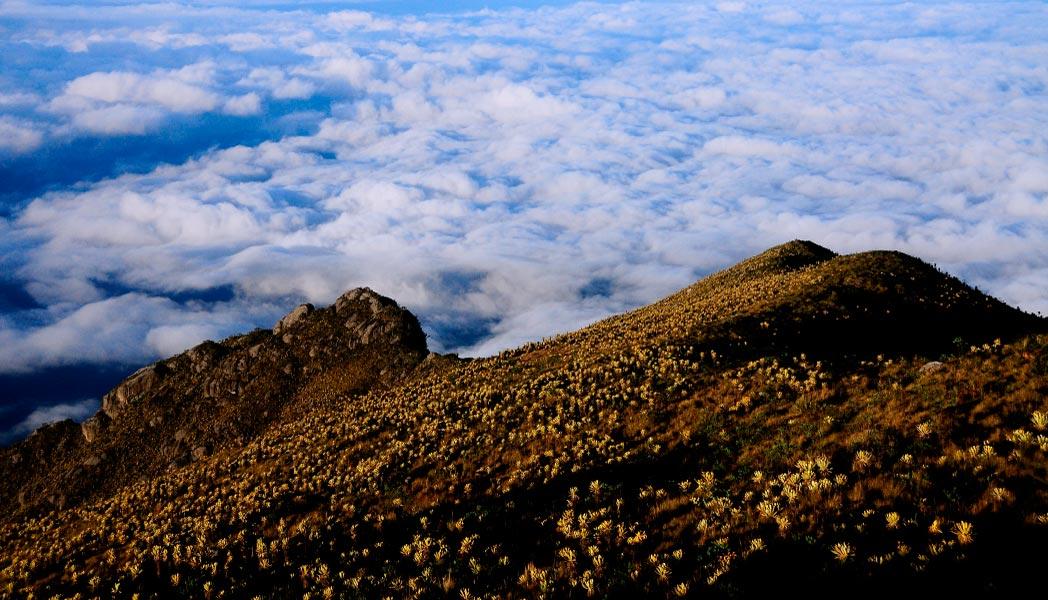 Esfera Viva, alto de campanas, fotografía, Páramo del sol, Antioquia, Urrao, senderismo, Colombia, páramo, laguna, bosque, Esfera Viva, destinos ecoturísticos, ecoturismo, montañas, frailejon, frailejonal
