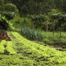 Agricultura orgánica regenerativa, agricultura, orgánica, regenerativa, verde, campos, suelos, seimbra, siembra viva, mercado orgánico, mercado, Esfera VIVA