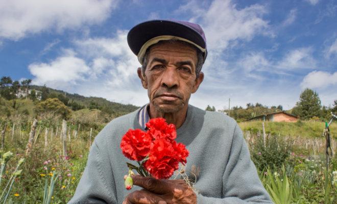 Santa Elena, flores, cultivo de flores, floricultura, medellin, corregimientos de medellin, medellin rural, ciudad, habitantes de medellín, agricultura, Esfera Viva, fotografía