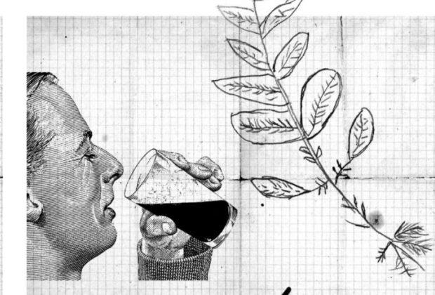 Yerbabuena, hierba buena, remedios caseros, plantas medicinales, fanzine, ilustración, medellín