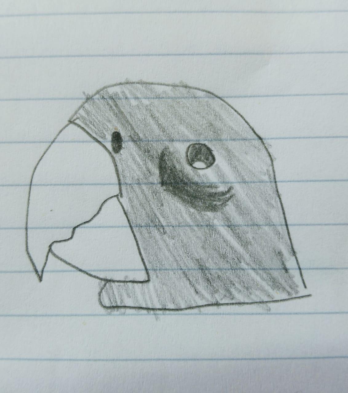 dibujo aves, aves, ilustracion de aves, Esfera Viva
