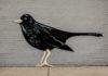 Black Bird On A Wall