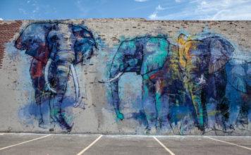 Elephants In Dallas