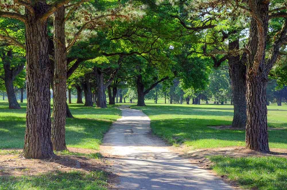 Cassville-Golf-Club,-Best-Golf-Courses-in-Southwest,-MO-Cart-Path