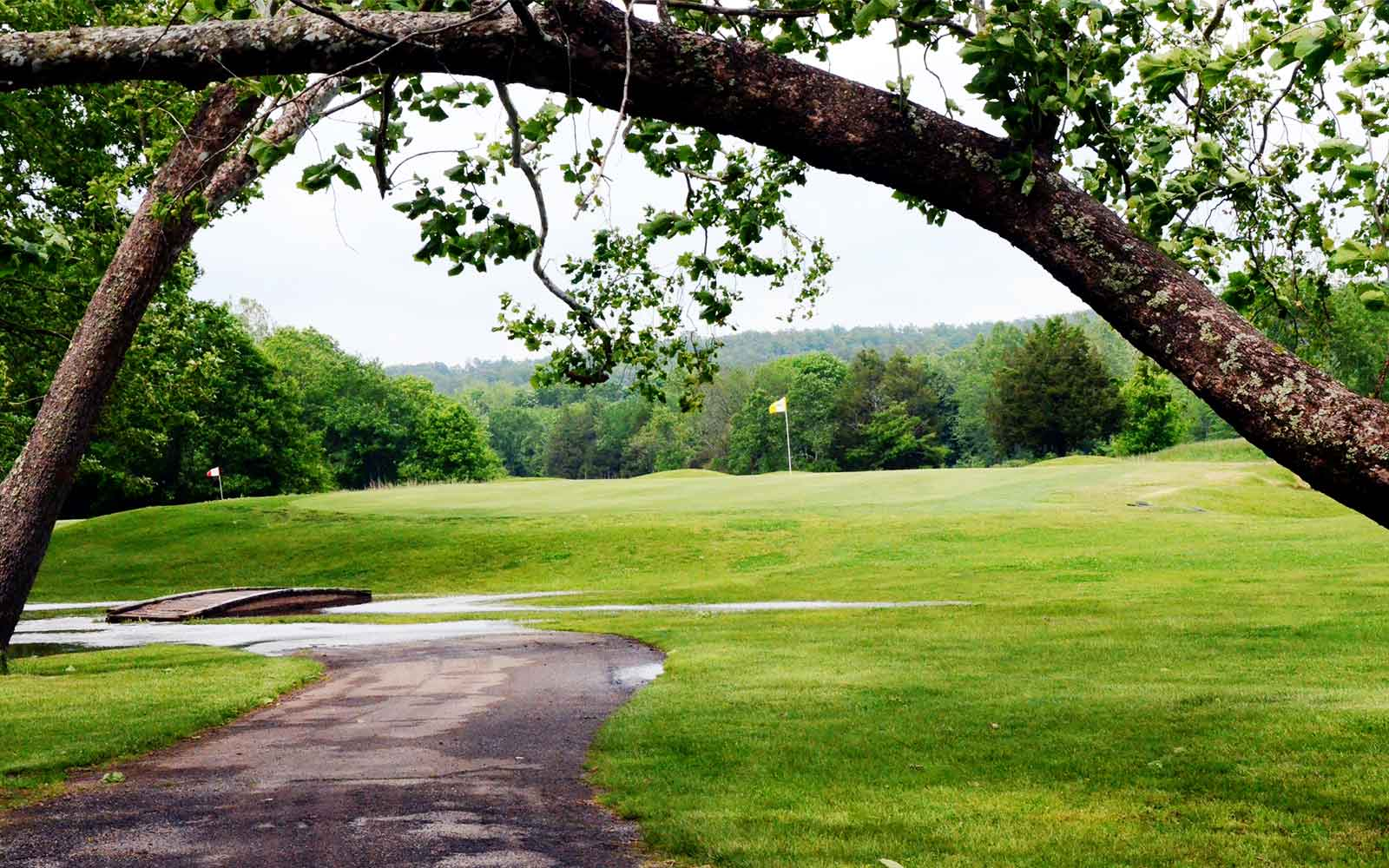 Fourche-Valley-Golf-Course,--Potosi,-MO_Trees