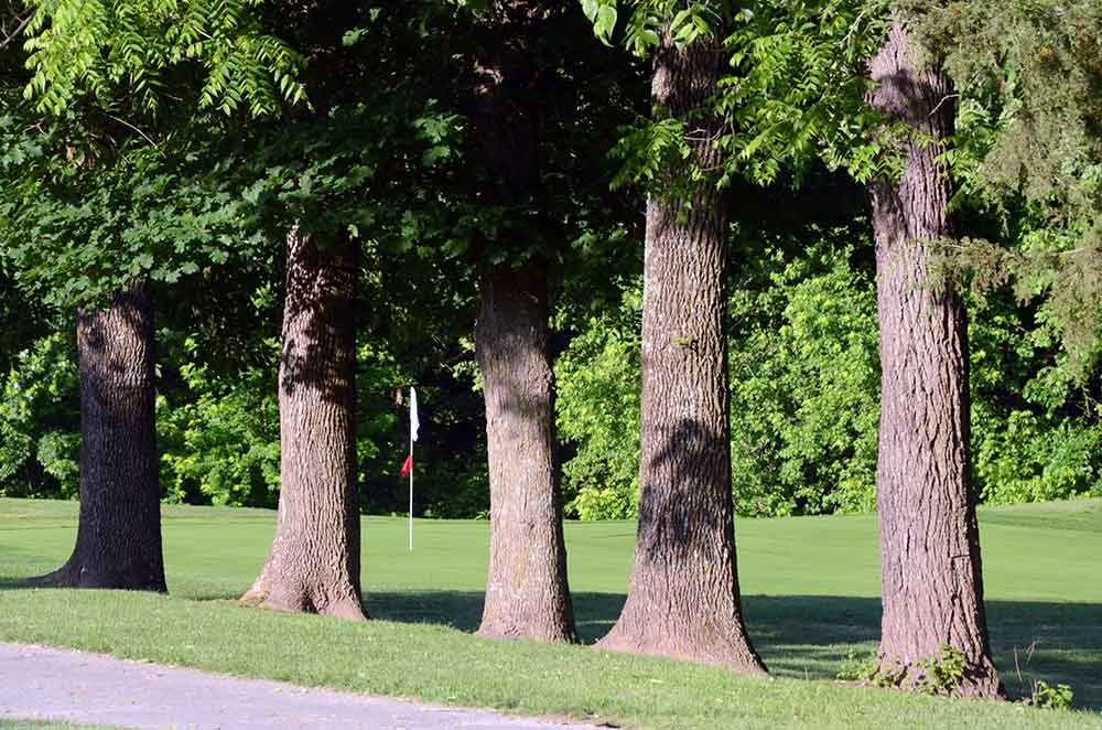 Hidden-Valley-Golf-Links,-Clever,-MO-Trees