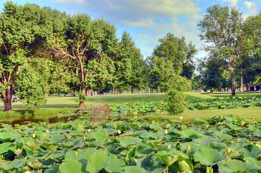 Riverside-Golf-Course,-St-Louis,-MO-Lilly-Pads
