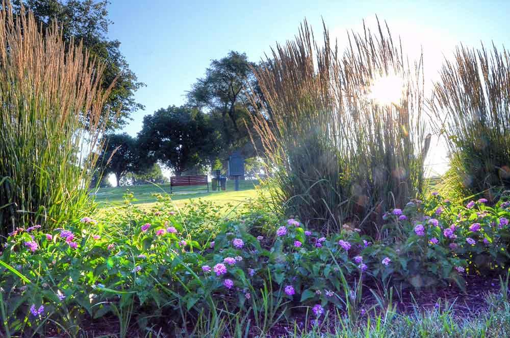 Swope-Memorial-Golf-Course,-Kansas-City,-MO-Flowers