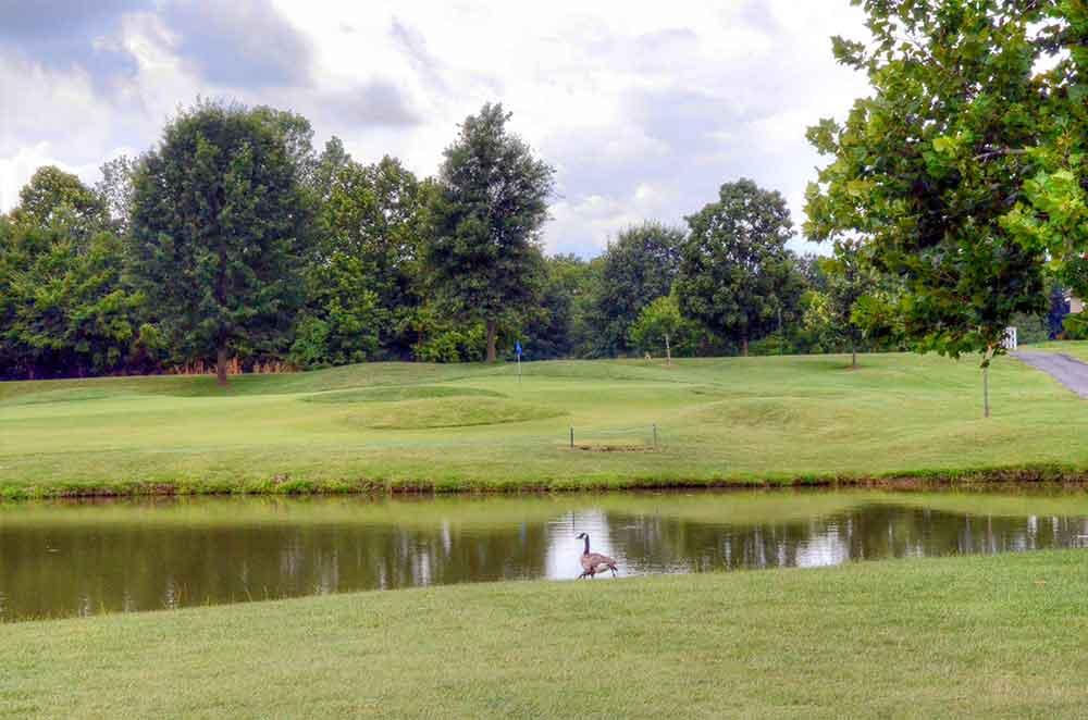 The-Falls-Golf-Club,-O'Fallon,-MO-Goose