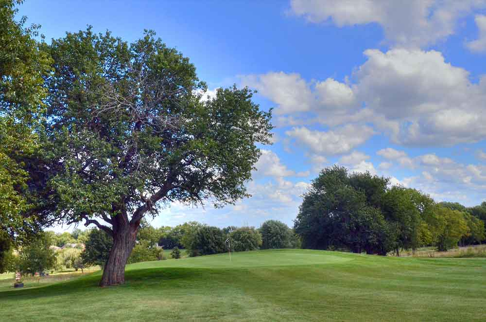 Twin-Pines-Country-Club,-Harrisonville,-MO-Tree