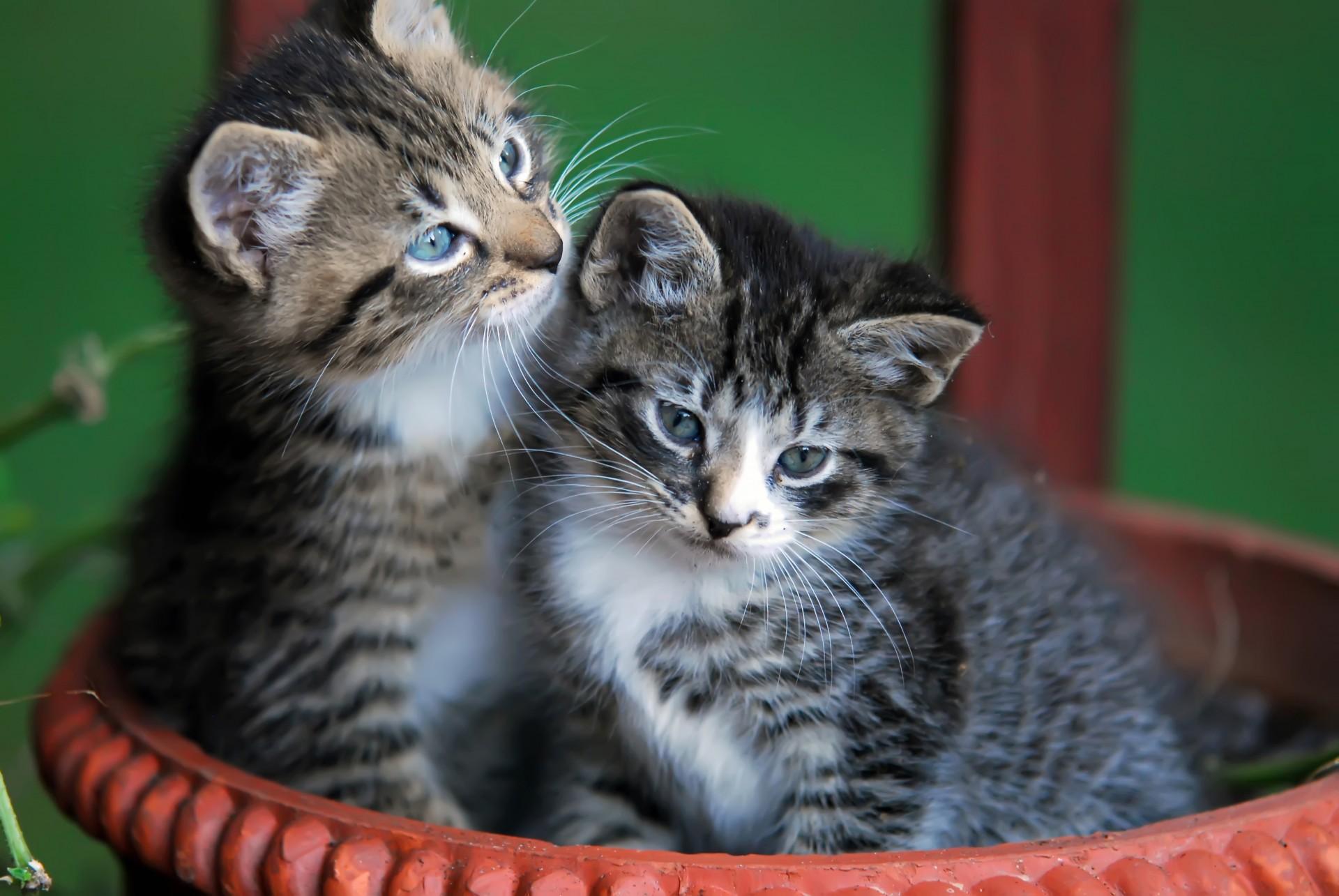 cute-kittens-in-basket
