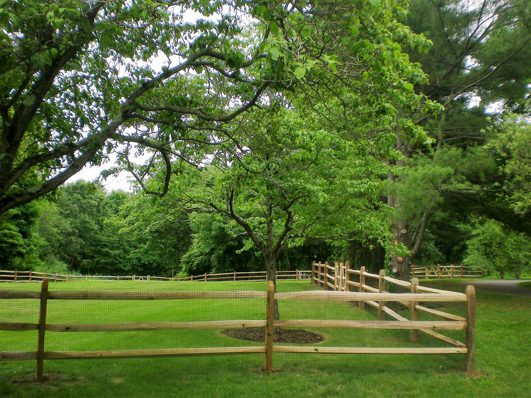 3 Rail Post and Rail Fencing