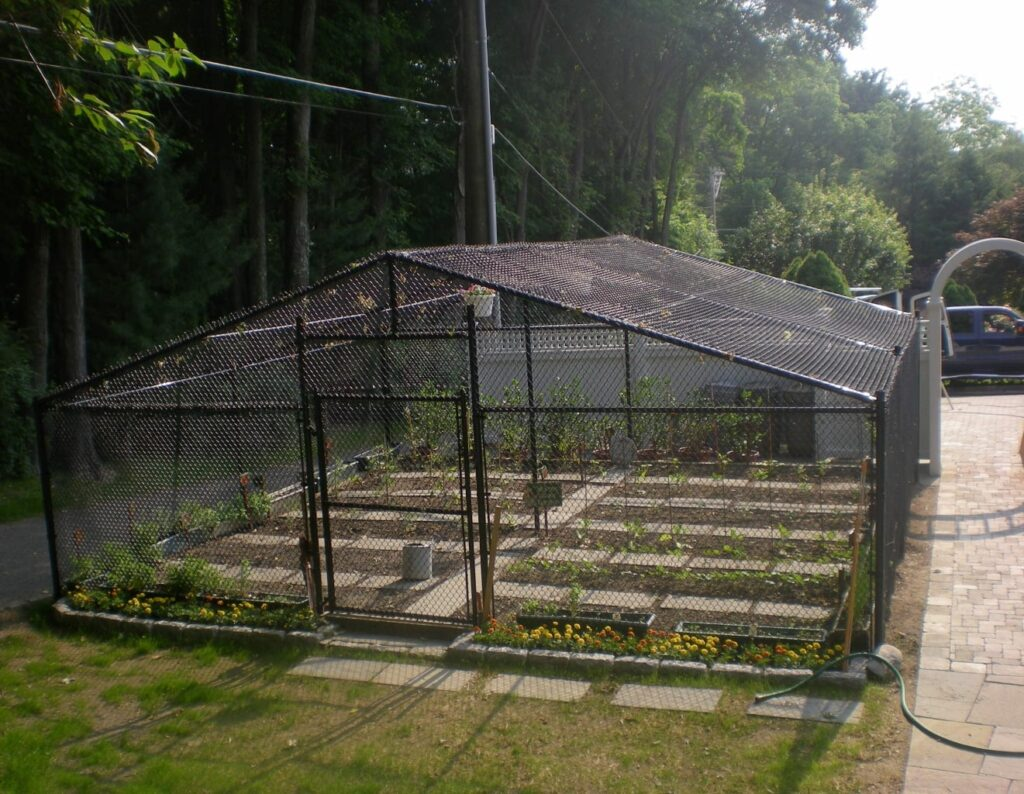Chain Link Garden Enclosure