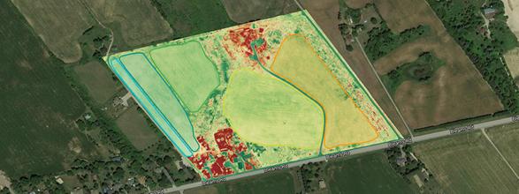 Drone Crop Health