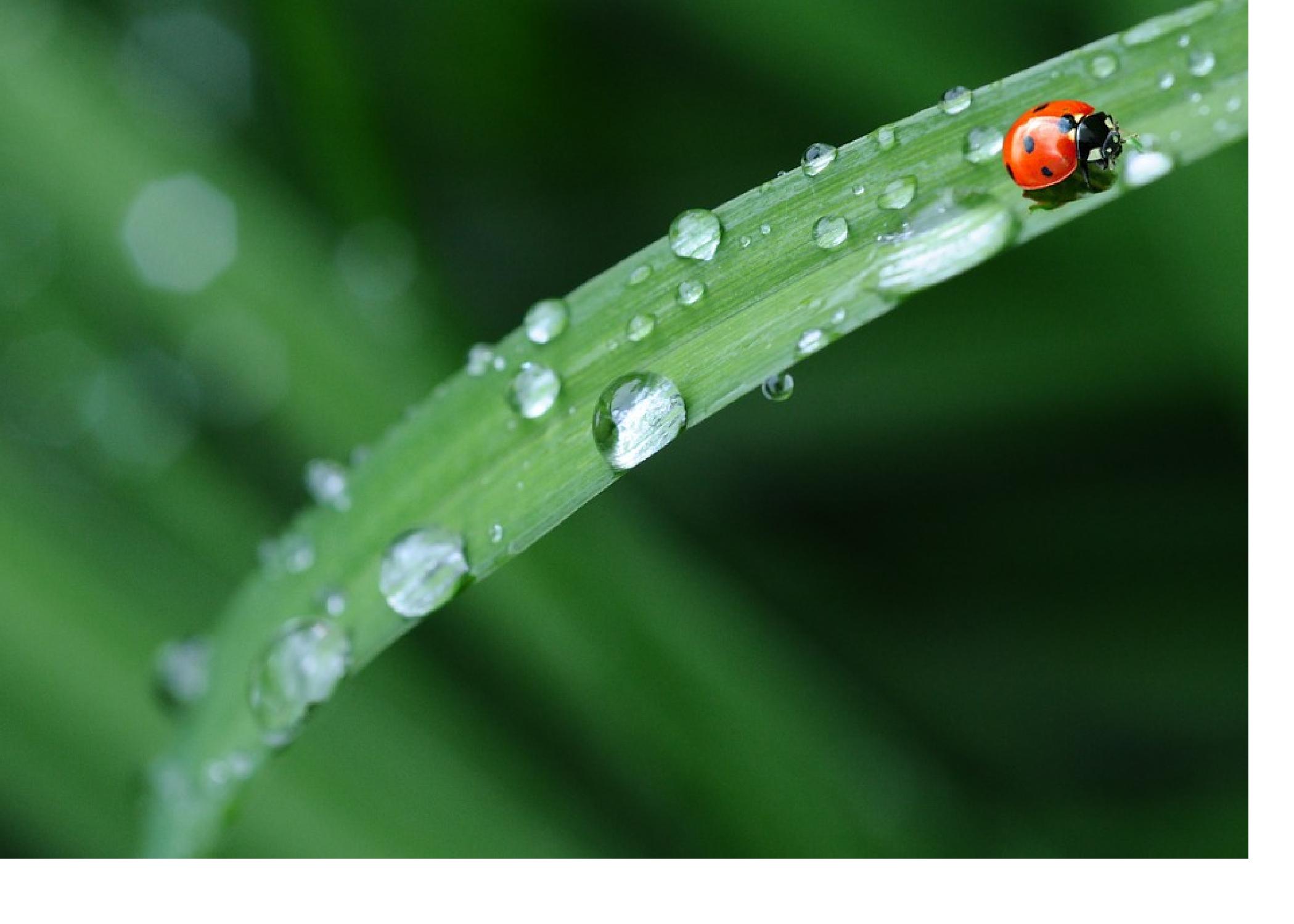 Spring Rain showers