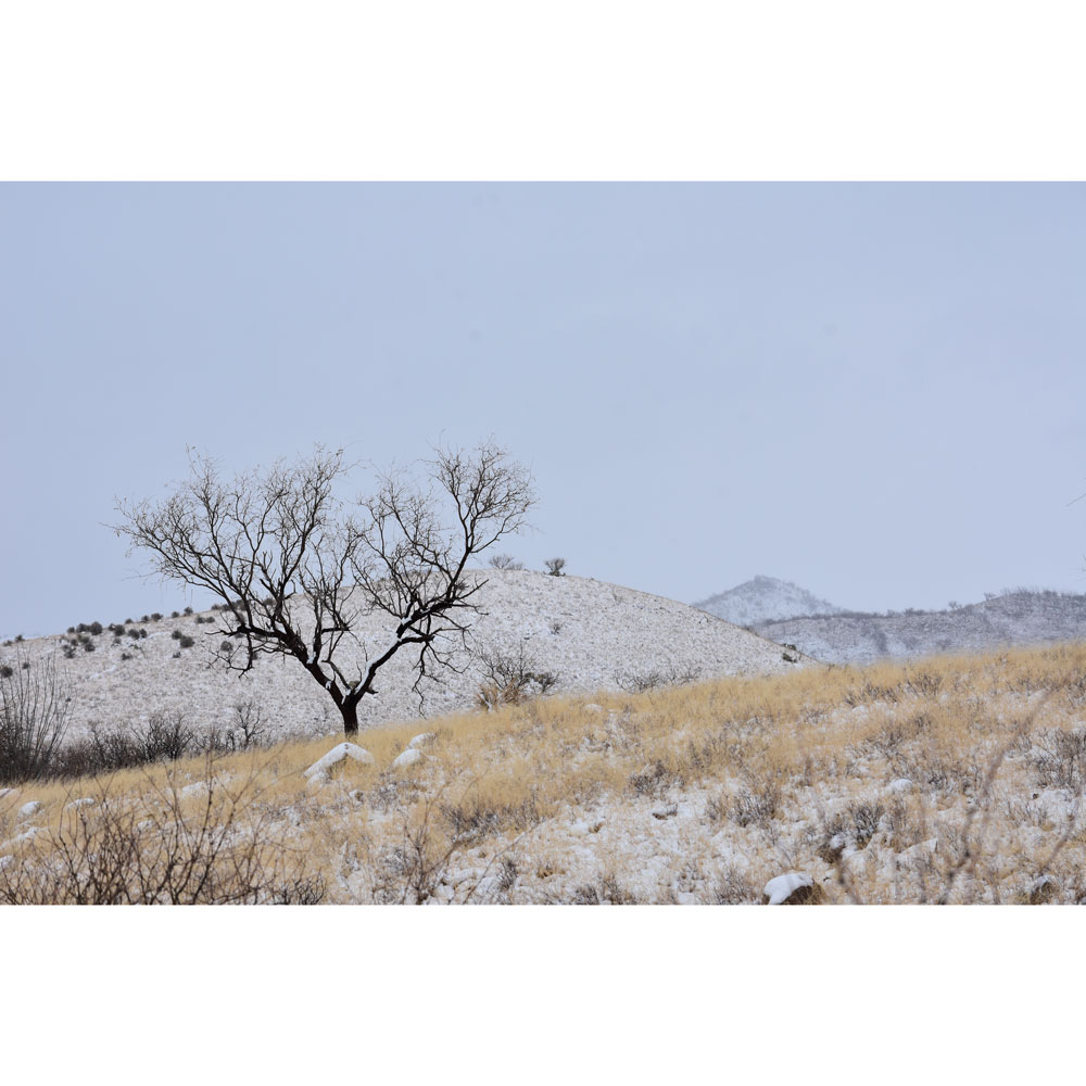 Winter Scene with Mesquite, Southern Arizona