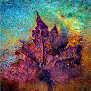 When Leaf Meets Ice, Photography by David Kennedy - Size 13in x 13in (February 2017)