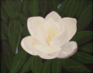 Magnolia Perfection, Oil by Linda M. Ward- Size 11in x 14in (August 2016)
