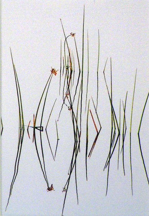 THIRD PLACE: Marsh Grass Reflections, Photography by Susan Krieg (February 2012)