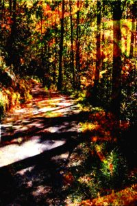 Walking the Shadows, Metallic Photo Print by Carolyn R. Beever (November 2012)