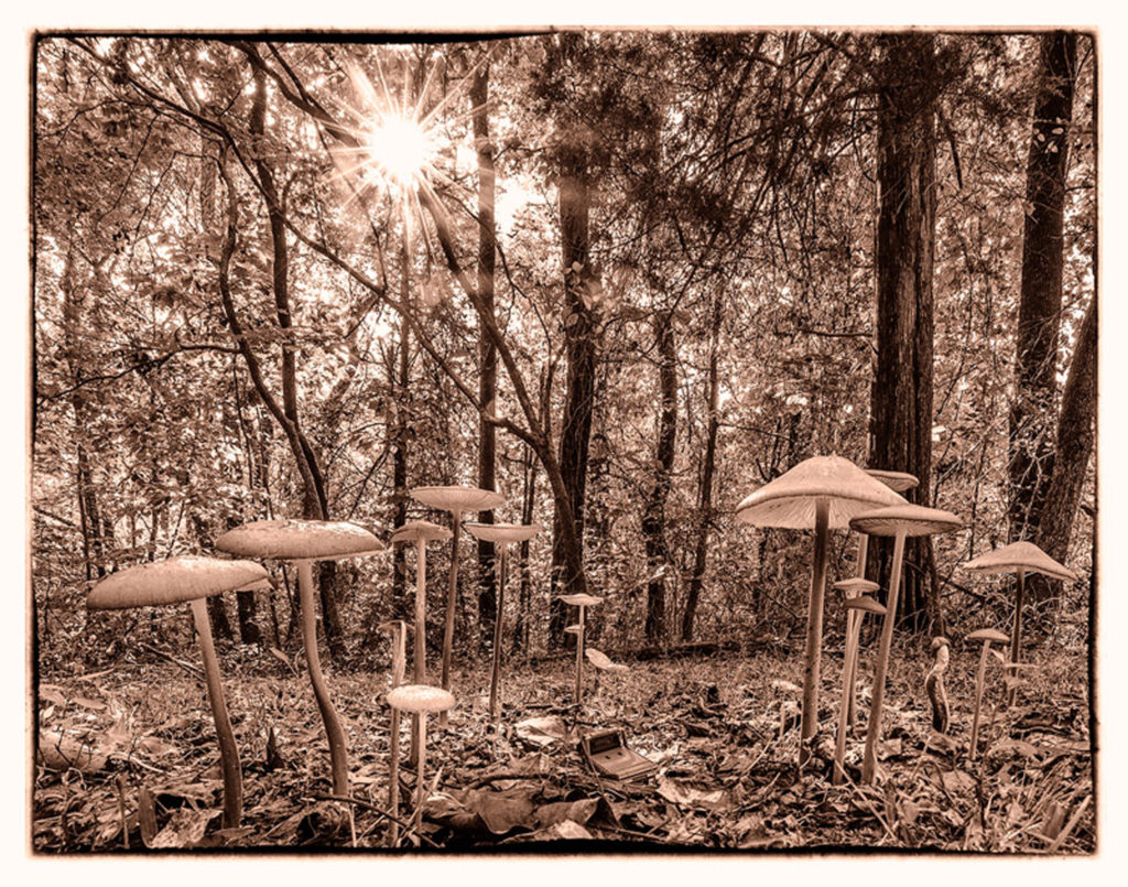 Mushroom Forest by David Boyd (CBTC: Oct. 2017-Jan. 2018)