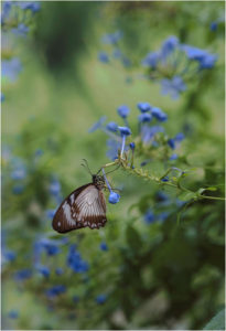 Balance in Blue, Photography by Rebecca Carpenter, 19in x 13in, $250 (February 2018)