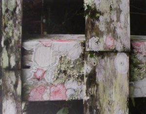 Christmas Wreath Lichens, Photograph by Penny A. Parrish, Unframed 11in x 14in Framed 16in x 20in (April 2013)