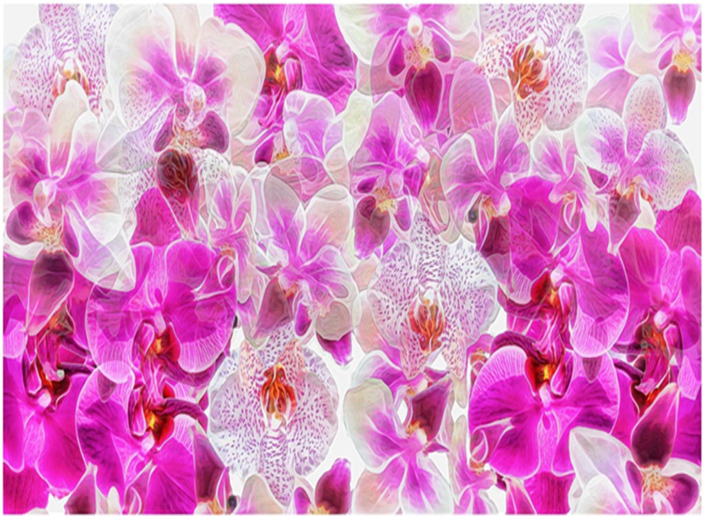 THIRD PLACE: Symphony of Orchids, Photography by Vicky McCracken, 22in x 30in, $350 (April 2018)