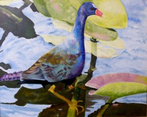 Callinule on Waterlilies, Oil by Charlotte Richards, Size 24in x 30in (October 2013)