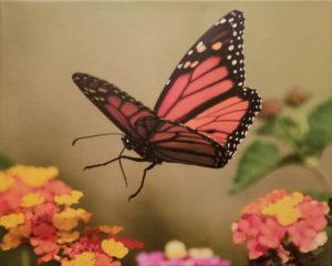 Butterfly Flight by Judy LaFratta (CBTC: February 2019)