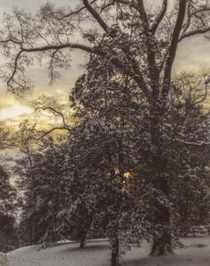 Fresh Morning Snow, Photography by Buddy Lauer, 19in x 15in, $125 (February 2019)