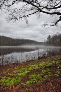 Mossy Bank, Photography by Carol Bochert, 12in x 8in, $50 (February 2019)