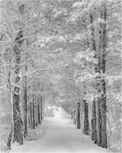 Quiet Path, Photography by Jeanne Jackson, 20in x 16in, $175 (February 2019)