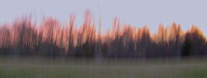 Winter Evening Treeline, Photography by Lee Cochrane, 9in x 24in, $150 (February 2019)